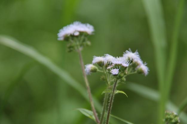 Dzikie rośliny