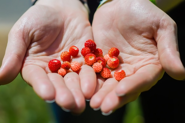 Dzikie truskawki trzymając się za ręce