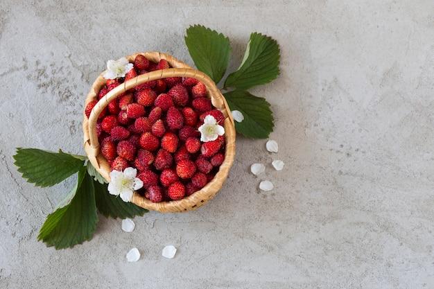 Dzikie truskawki w koszu na szarym stole, liście dzikiej truskawki i kwiaty