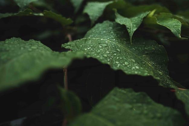 Dzikie zielone liście z rosą na nich