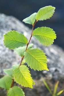 Dzikie zielone liście