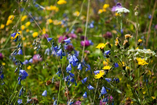 Dziko kwitnąca łąka na rozmytym tle