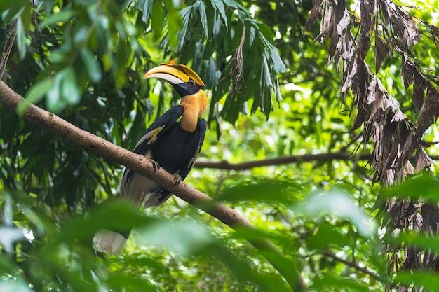 Dzioborożce, ptak na drzewie