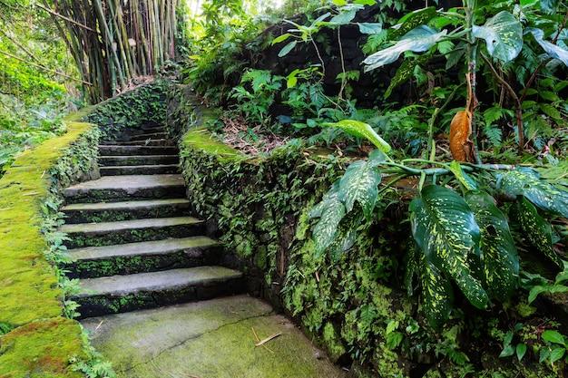 Dżungla na hawajach
