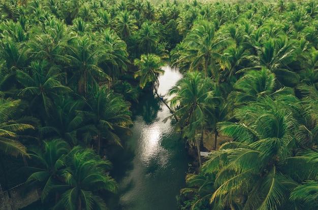 Dżungla palmy na filipinach. koncepcja tropikalnych podróży wanderlust. kołysząc się na rzece. ludzie dobrze się bawią