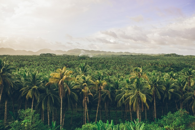 Dżungla palmy na filipinach. koncepcja tropikalnych podróży wanderlust