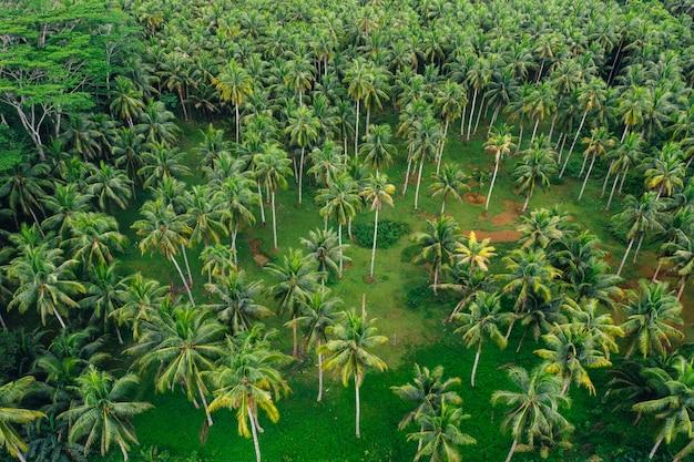 Dżungla palmy na filipinach. koncepcja tropikalnych podróży wanderlust.