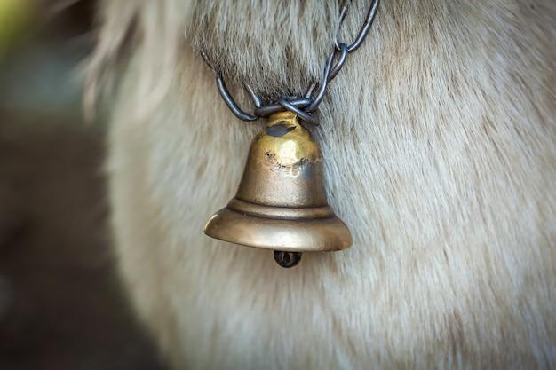 Dzwonek na szyi białej kozy zbliżenie. dzwonek na szyję kozy