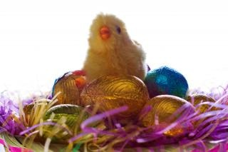 Easter żywy grupa