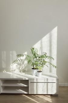Eco nowoczesny stół do telewizora z zielonymi roślinami doniczkowymi i cieniami na jasnej ścianie z okna w słoneczny dzień, miejsce na tekst. eko przestrzeń domowa.
