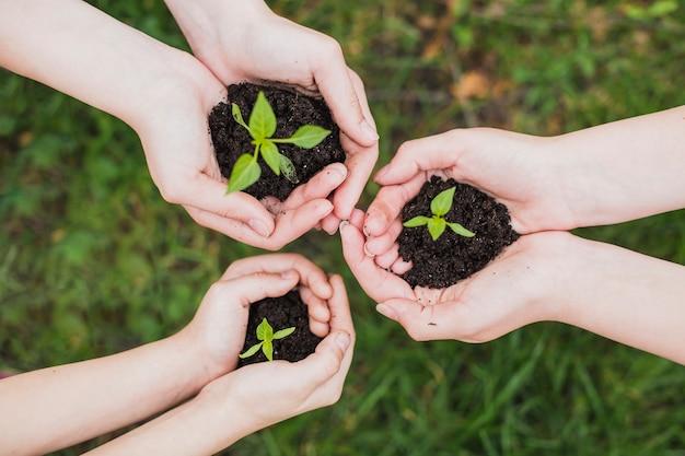 Eco pojęcie z rękami trzyma małe rośliny