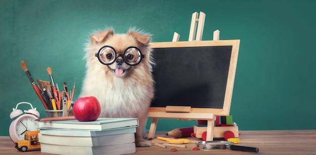 Edukacja, koncepcja powrotu do szkoły ze ślicznymi szczeniętami pomorskiego psa rasy pekińskiej mieszanej
