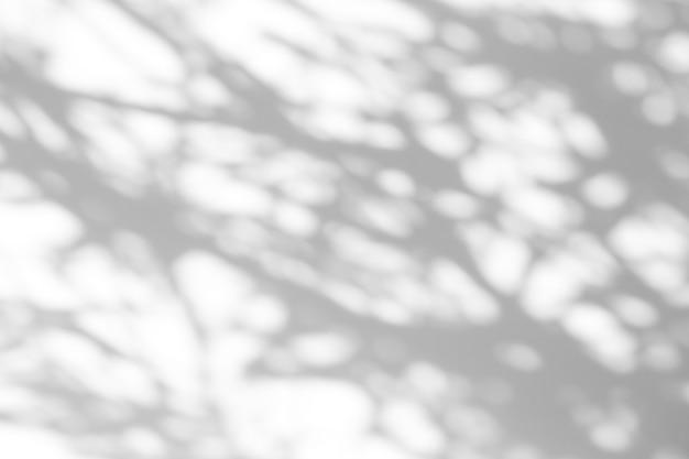 Efekt nakładki cienia. cienie z liści drzew i tropikalnych gałęzi na białej ścianie w słońcu.