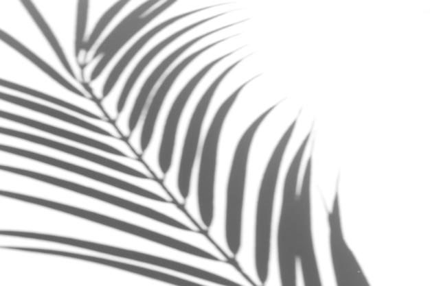 Efekt nakładki cienia na zdjęcie. cienie liści palm i tropikalnych gałęzi na białej ścianie w słońcu.
