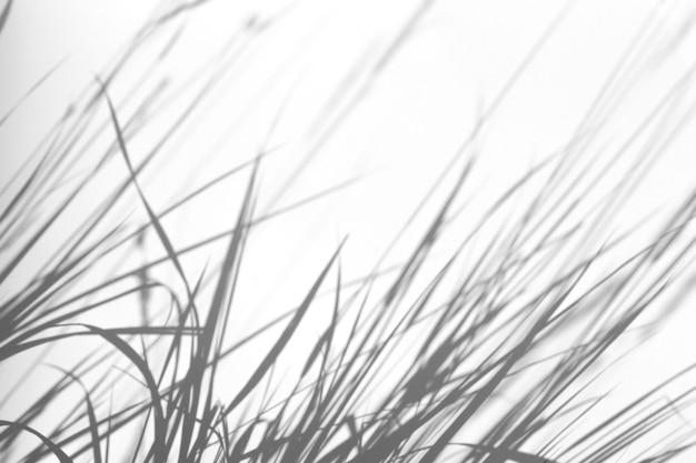 Efekt nakładki cienia. trawa i cienie roślin na białej czystej ścianie w słońcu