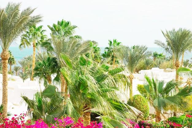 Egipski kurort hotelowy i spa wybrzeże morza czerwonego w sharm el sheikh synaj egipt