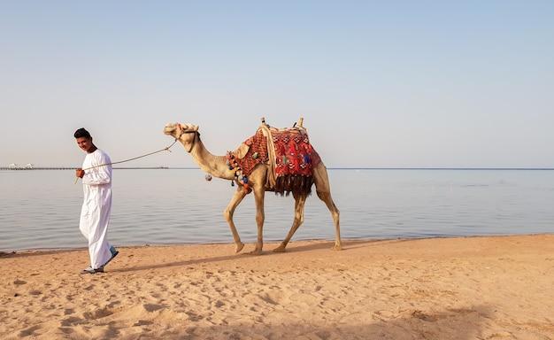 Egipt, sharm el sheikh - 15 czerwca 2019: właściciel wielbłąda, spacerując po plaży, szuka turysty, który zaoferuje przejażdżkę na wielbłądzie. miejscowy mieszkaniec egiptu oferuje turystom przejażdżkę po piaszczystym brzegu.