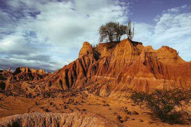 Egzotyczna dzika roślina rosnąca na skałach na pustyni tatacoa w kolumbii pod błękitnym niebem
