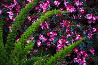 Egzotyczna roślina blisko kwiatów
