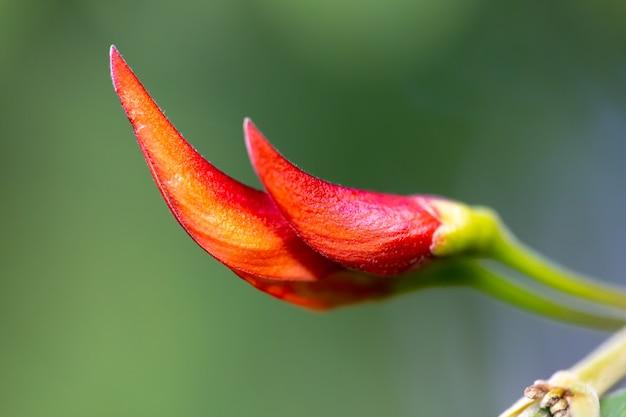 Egzotyczna roślina o pięknym czerwonym pąku