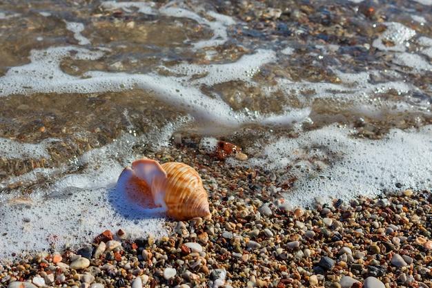 Egzotyczna skorupa w piasku na plaży. fale z piankowym błękitnym morzem na pogodnej piaskowatej plaży w kurorcie na wakacje odpoczynku.