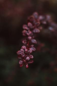 Egzotyczne fioletowe nastrojowe świeże kwitnące pąki kwiatowe z kroplami deszczu kwiatowe naturalne organiczne tło