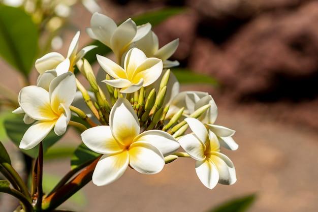 Egzotyczne kwiaty z tło zamazane pole