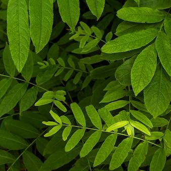 Egzotyczne liście i rośliny