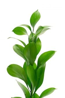 Egzotyczne liście roślin na białym tle