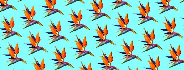 Egzotyczne tropikalne kwiaty ptak rajski (strelitzia), panoramiczny wzór na niebieskim tle