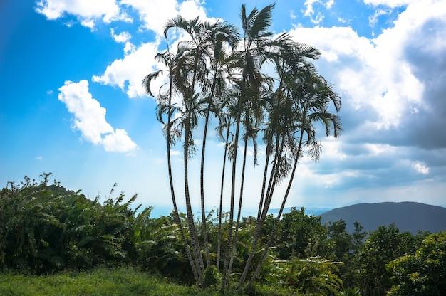 Egzotyczne wysokie drzewa w górach tropikalnych lasów deszczowych w tle