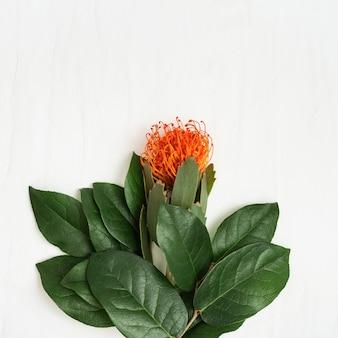 Egzotyczny kwiat leucospermum z pomarańczowymi płatkami i gałęziami z zielonymi liśćmi na świetle koncepcja wakacje z naturalnym kwiatem. widok z góry i kopiowanie miejsca.