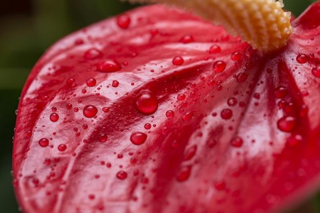 Egzotyczny kwiat z bliska