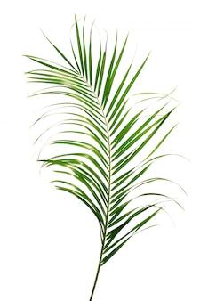 Egzotyczny tropikalny liść na białym tle