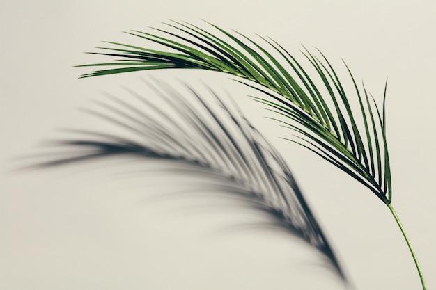 Egzotyczny zielony liść i swój cień na lekkim tle.
