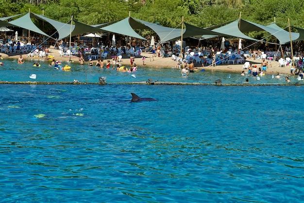 Eilat-izrael 8 września 2018 r. rafa delfinów na morzu czerwonym.
