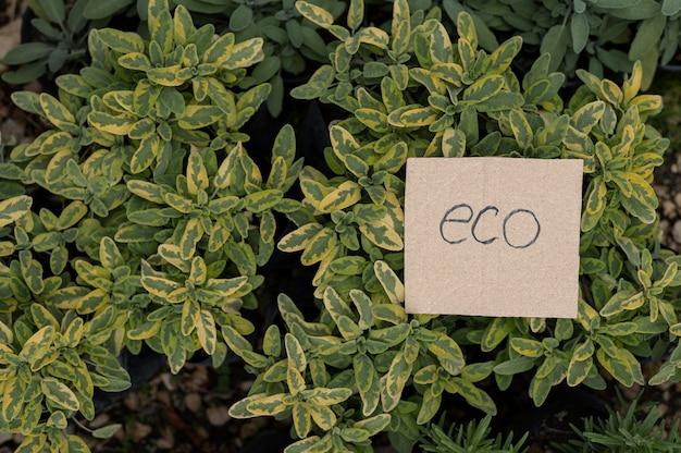 Eko ogród zielonych roślin