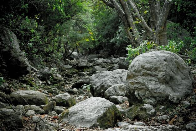 Ekologia kraj wsi coppice spaceru spacerowanie