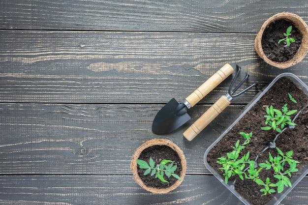 Ekologiczne doniczki z młodymi kiełkami pomidorów na drewnianej ścianie, kielnia ogrodowa i grabie