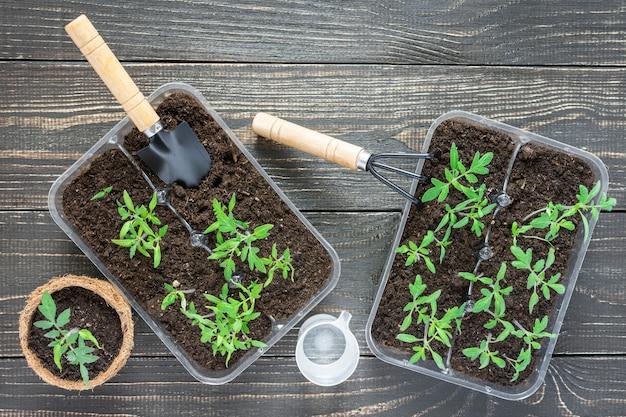 Ekologiczne doniczki z młodymi kiełkami pomidorów na drewnianym tle, kielnia ogrodowa i grabie oraz szklanka wody do podlewania