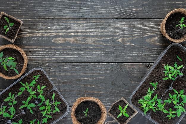 Ekologiczne doniczki z młodymi kiełkami pomidorów na drewnianym tle