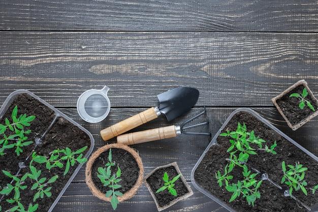 Ekologiczne garnki z kiełkami młodych pomidorów na drewnianym tle, kielnia ogrodowa i grabie oraz szklanka wody do podlewania