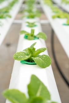 Ekologiczne gospodarstwo do uprawy warzyw hydroponicznych