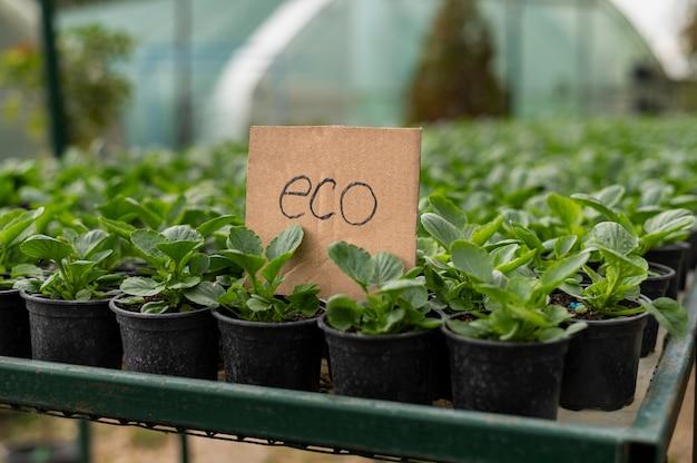 Ekologiczne rośliny uprawiane lokalnie w doniczkach