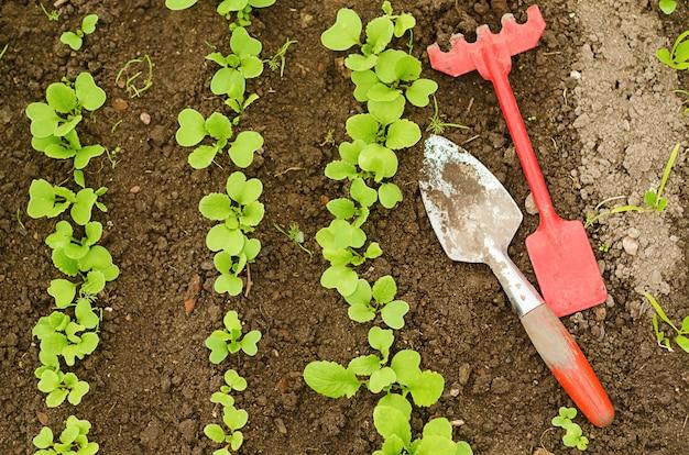 Ekologiczne warzywa, młode rzodkiewki w ziemi w eko domu. uprawa ziemi narzędziami ogrodniczymi, pielęgnacja sadzonek. czas sadzenia, wiosenna roślina, rolnictwo