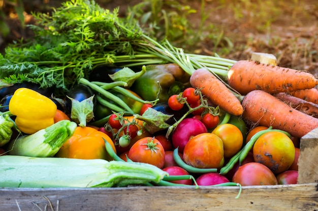 Ekologiczne warzywa z domowego ogrodu