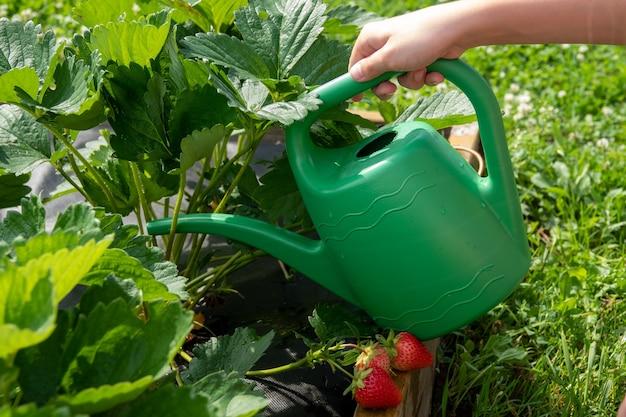 Ekologiczny ogród z nawadnianiem i małymi roślinami w ogrodzie