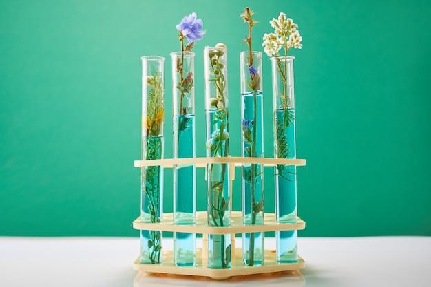 Eksperyment naukowy - kwiaty w probówkach. zielona świeża roślina w laboratorium na zielonej ścianie. pojęcie badań biologicznych.