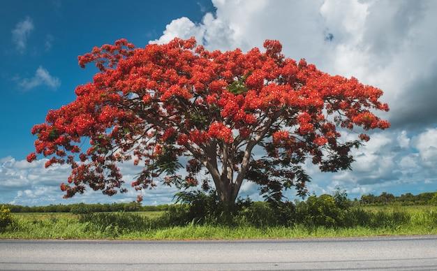 Ekstrawaganckie drzewo na poboczu drogi z oświetleniem słonecznym na zewnątrz