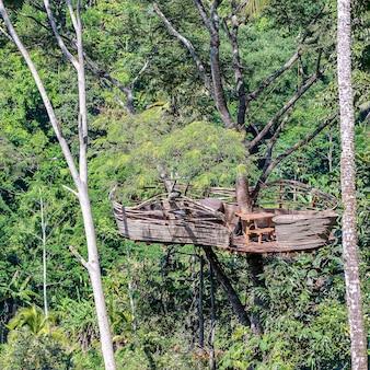 Ekstremalny teren rekreacyjny na wysokim drzewie tropikalnym w dżungli w pobliżu tarasów ryżowych na wyspie bali, indonezja. koncepcja przyrody i podróży